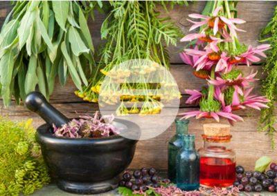 Heilpflanzenfibel von Natascha von Ganski