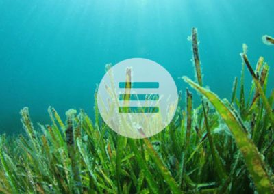 Biophotonen-reiche Lebensmittel aus dem Meer