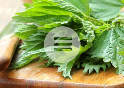 Entzündungen & Rheuma –Heilpflanzentipp – Brennnesselblätter